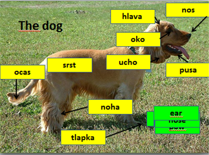 the-dog.png