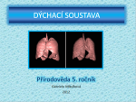 dychacisoustava.png